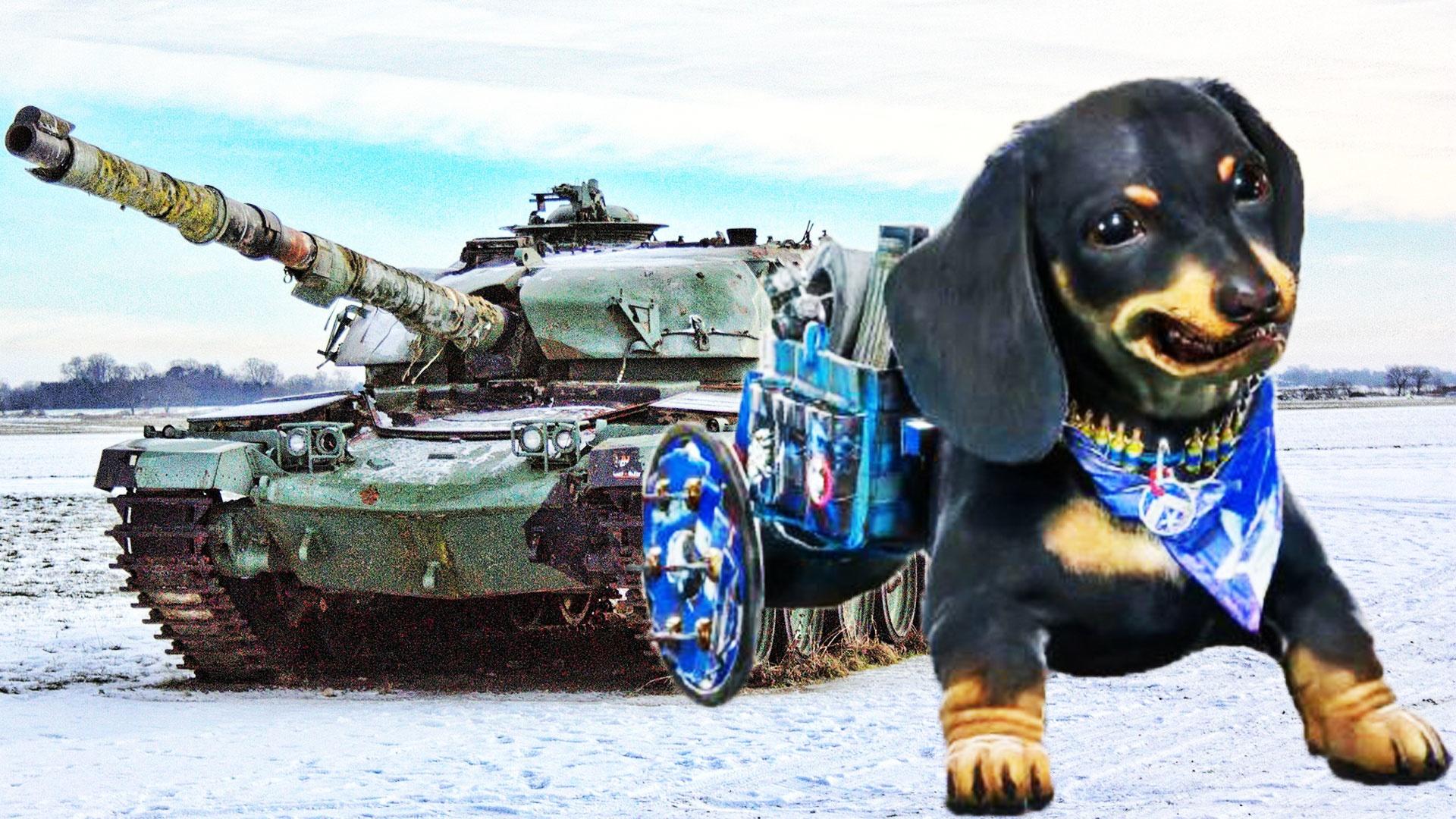 Far Cry 6 Panzer Fahren Todliche Dackel Bestatigt